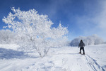 snowshoeing across a field with frost covered trees,near Estevan, Saskatchewan, Canada