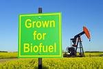 close-up of grown for biofuel sign and a bloom stage canola field with oil pumpjack in the background, near Carlyle, Saskatchewan, Canada