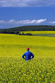 a man looks out over a field of bloom stage canola,  Tiger Hills, Manitoba, Canada