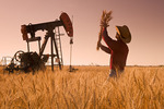 a man examines harvest ready wheat while an oil pumpjack works in the background, near Sinclair, Manitoba, Canada