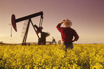 a man looks out over a bloom stage canola field with an oil pumpjack in the background, near Carlyle, Saskatchewan, Canada
