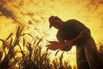 a farmer checks a maturing barley crop, near Dugald, Manitoba