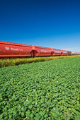 rail hopper cars carrying potash next to an early growth canola field, near Carman, Manitoba, Canada