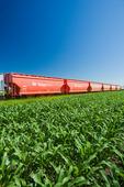 rail hopper cars carrying potash next to a grain corn field, near Carman, Manitoba, Canada