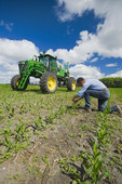 a farmer scouts for weeds in his early growth feed or grain corn field before a high clearance sprayer gives a chemical application of herbicide, near Steinbach, Manitoba, Canada
