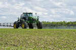 a high clearance sprayer gives a chemical application of herbicide to early growth corn, near Steinbach, Manitoba, Canada