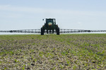a high clearance sprayer gives a chemical application of herbicide to early growth canola, near Steinbach, Manitoba, Canada