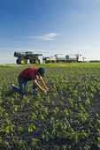 a farmer scouts his field before a high clearance sprayer gives a chemical application of herbicide to early growth soybeans, near Niverville, Manitoba, Canada