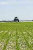 a high clearance sprayer gives a chemical application of herbicide to early growth soybeans, near Niverville, Manitoba, Canada