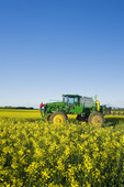 man on high clearance which was sprayer applying fungicide on a bloom stage canola field near Somerset, Manitoba, Canada
