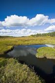 pond, Prince Albert National Park, Saskatchewan, Canada