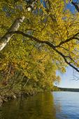 autumn, Waskasiu Lake, Prince Albert National Park, Saskatchewan, Canada