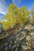 Canadian Shield rock, Dickens Lake,  Saskatchewan, Canada