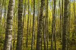 trees, autumn, Prince Albert National Park, Saskatchewan, Canada