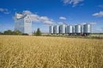 grain elevator and mature wheat field and near Domremy, Saskatchewan, Canada