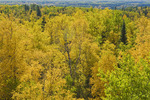 autumn view from Baldy Mountain, highest point in Manitoba,  Duck Mountain Provincial Park, Manitoba, Canada