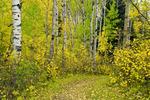 autumn, deciduous forest, Riding Mountain National Park, Manitoba, Canada