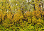 autumn, deciduous forest, Riding Mountain National Park, Manitoba, Canada