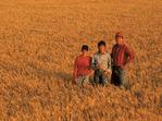 farm family in winter wheat field