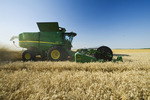 winter wheat harvest, Manitoba, Canada