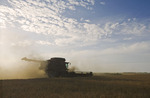 a combine harvester works in a yellow field pea field near Winnipeg,  Manitoba, Canada