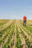 a farmer scouts an early growth canola in a zero till grain stubble field, Tiger Hills, Manitoba, Canada