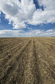 a  newly seeded canola field, Tiger Hills, Manitoba, Canada
