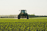 a high clearance sprayer make a chemical application of herbicide on early growth feed/grain corn , near Niverville, Manitoba, Canada