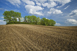 a  newly seeded canola field in zero till wheat stubble, Tiger Hills, Manitoba, Canada