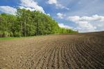 newly seeded grain field, Tiger Hills, Manitoba, Canada
