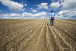 a farmer scouts a newly seeded canola field in zero till wheat stubble, Tiger Hills, Manitoba, Canada