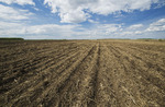 newly seeded canola  field with wheat straw residue , Tiger Hills, Manitoba, Canada