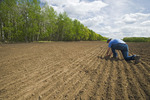a farmer scouts a newly seeded wheat field, Tiger Hills, Manitoba, Canada