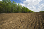 newly seeded grain field, Tiger Hills, Manitoba, Canada