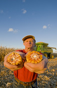 a man holds  grain/feed corn during the harvest, near Niverville, Manitoba, Canada