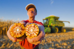 a man holds feed/grain corn next to a combine filled with the harvested crop,  near Niverville, Manitoba, Canada