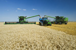 a combine harvests winter wheat while unloading into a grain wagon on the go, near Niverville, Manitoba, Canada