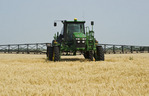 a high clearance sprayer gives a chemical application of herbicide to mature  winter wheat, near Carey, Manitoba, Canada