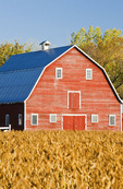 red barn , mature soybean field, Grande Pointe,  Manitoba, Canada