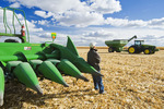a man looks out from a combine during the feed/grain corn harvest near Niverville, Manitoba, Canada