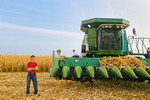 a man next to a combine fduring the grain/feed corn harvest  near Niverville, Manitoba, Canada