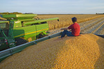 a man relaxes in a grain wagon full of feed/grain corn next to a combine filled with the harvested crop  near Niverville, Manitoba, Canada