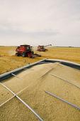 oat harvest, near Dugald, Manitoba, Canada