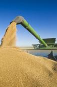 a combine harvests winter wheat while unloading into a grain wagon on the go, near Niverville, Manitoba, Canada