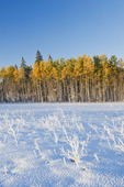 autumn snow in Birds Hill Provincial Park, Manitoba, Canada