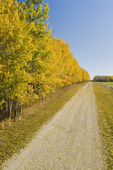 road through farmland, Manitoba, Canada