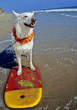 Dog on boogie board