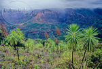 View of Waimea Canyon from the Iliau Nature Loop