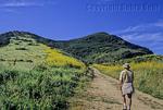 Hiker on the Zuma Ridge Trail in Malibu
