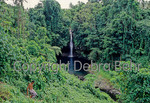Islander walks down path to Afua Aau, also called Olemoe Falls, on Savaii in Samoa